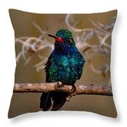 Molting Hummingbird Throw Pillow
