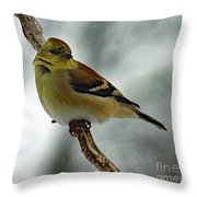 Molting In January? - American Goldfinch Throw Pillow