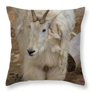 Molting Mountain Goat Throw Pillow