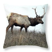 Molting Tomales Bay Elk Throw Pillow