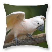 Moluccan Cockatoo At The Omaha Zoo Throw Pillow