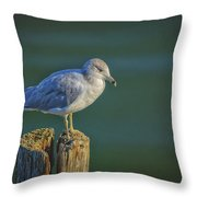 Momentary Pause Throw Pillow