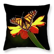 Monarch And Tithonia Light And Shadow Throw Pillow