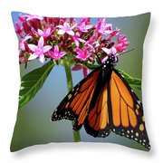 Monarch Beauty Throw Pillow