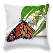 Monarch Butterfly In The Garden 3 Throw Pillow