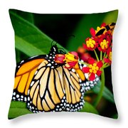 Monarch Butterfly At Lunch With 2 Box Elder Bugs Throw Pillow
