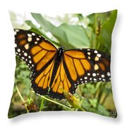 Monarch Butterfly II Throw Pillow