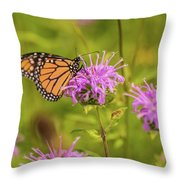 Monarch Butterfly On Bee Balm Flower Throw Pillow