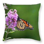 Monarch Butterfly On Butterfly Bush 2011 Throw Pillow