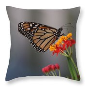 Monarch Butterfly On Milkweed Throw Pillow