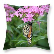 Monarch Butterfly On Pink Flowers  Throw Pillow