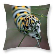 Monarch Caterpillar Clutches Dill In Pincers, Macro Throw Pillow