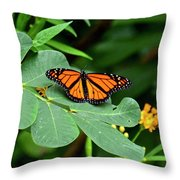 Monarch Butterfly Resting On Cassia Tree Leaf Throw Pillow