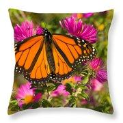 Monarch Feeding Throw Pillow