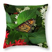 Monarch Framed Throw Pillow