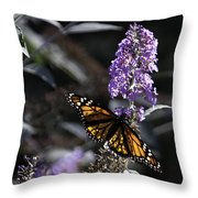 Monarch In Backlighting Throw Pillow by Rob Travis