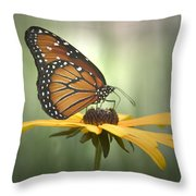 Monarch On A Black Eyed Susan Throw Pillow