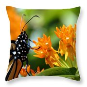 Monarch On Asclepias Throw Pillow