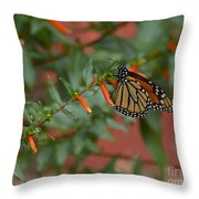 Monarch On Cigar Plant Throw Pillow