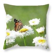 Monarch On Daisies Throw Pillow