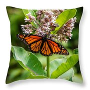 Monarch On Milk Weed Throw Pillow