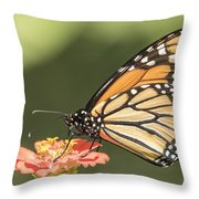 Monarch On Zinnia 4-2015 Throw Pillow