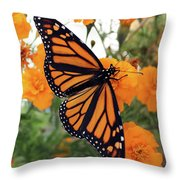 Monarch Series 1 Throw Pillow
