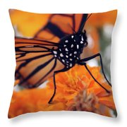 Monarch Series 2 Throw Pillow