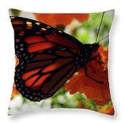 Monarch Series 8 Throw Pillow