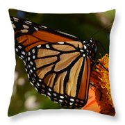Monarch Up Close Throw Pillow