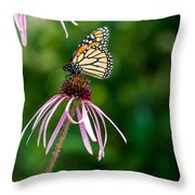 Monarched Coneflower Throw Pillow