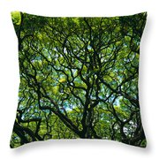 Monkeypod Canopy Throw Pillow by Peter French - Printscapes