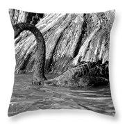 Monochrome Swimming Black Swan Throw Pillow