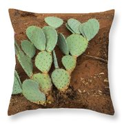 Monsoon Prickly Pear Throw Pillow