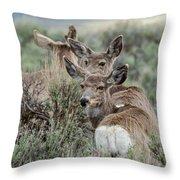 Montana Mule Deer On A Spring Night Throw Pillow