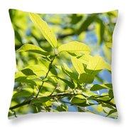 Monterrey Oak Leaves In Spring Throw Pillow