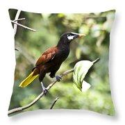 Montezuma Oropendula Throw Pillow