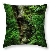 Moody Tree In Forest Throw Pillow