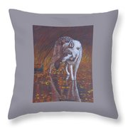 Moonlight Drink Throw Pillow by Lorraine Foster