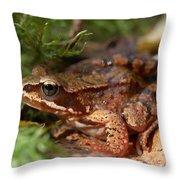 Moor Frog In September  Throw Pillow