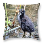 Moorhen Chick Throw Pillow