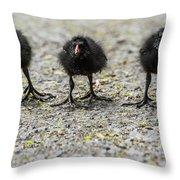 Moorhen Chicks Throw Pillow