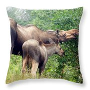 Moose And Calf Forage Throw Pillow