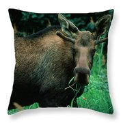 Moose At Lunch Throw Pillow