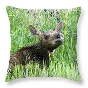 Moose Baby Throw Pillow