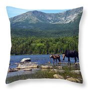 Moose Baxter State Park Maine 2 Throw Pillow