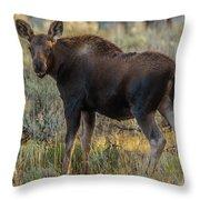 Moose Calf In Fall Colors Throw Pillow