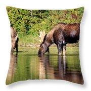 Moose Country Throw Pillow