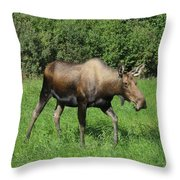 Moose Cow Grazing Throw Pillow