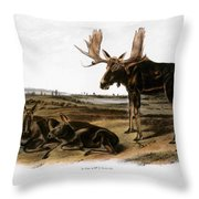 Moose Deer (cervus Alces) Throw Pillow by Granger